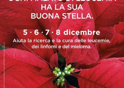 Stella Di Natale Ail 2021.Stelle Di Natale Ail Ail Arezzo